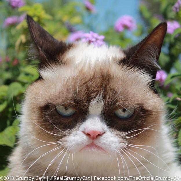 grumpy cat happy birthdaygrumpy cat no, grumpy cat игра, grumpy cat birthday, grumpy cat art, grumpy cat пермь, grumpy cat game, grumpy cat взлом, grumpy cat happy birthday, grumpy cat перевод, grumpy cat wallpaper, grumpy cat рисунок, grumpy cat meme, grumpy cat мем, grumpy cat png, grumpy cat christmas, grumpy cat книга, grumpy cat игрушка, grumpy cat gif, grumpy cat smile, grumpy cat новый год