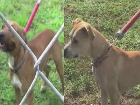 Two Port St. Lucie dogs impounded for barking at neighbor, could be euthanized