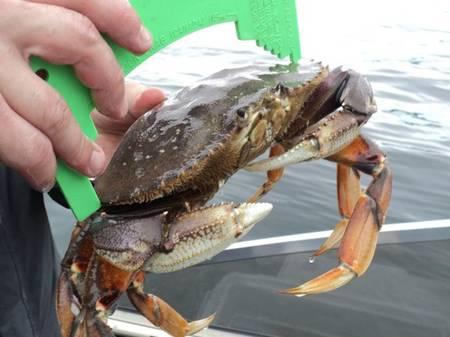 Petition add shellfish to the wa state fishing records for Washington state fish