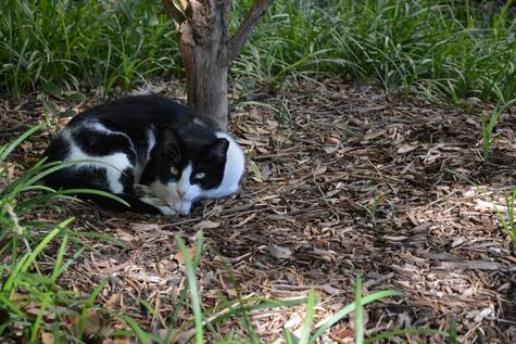 Southern Methodist University has suspended its plans to relocate its feral cat population