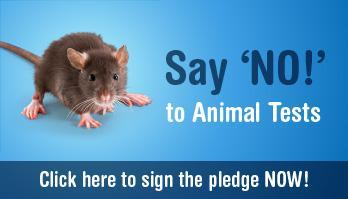 animal testing cruel yet necessary Animal experiments are cruel mice and rats and would not be on our pharmacy shelves if it had been tested according to current animal testing standards.