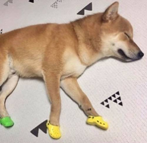 Petition Crocs 4 dogs