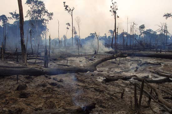 the destruction of tropical rainforests and Start studying apes multiple choice learn which of the following is not considered to be a major underlying factor in the destruction of tropical rain forests.