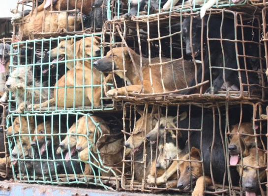 Help Regulate Inhumane Breeding and Living Conditions in Puppy Mills!