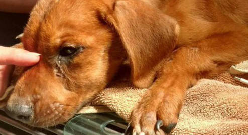 Allow us to place a memorial bench on City or County Property in memory of Caleb the neglected puppy