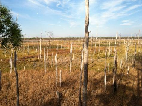 Petition permanent tree stands on blackwater national for Permanent tree stand