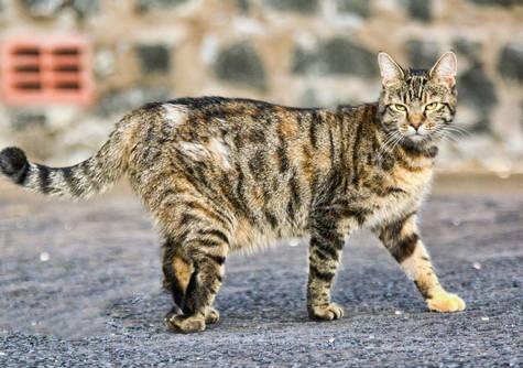 HELP SAVE PHIBSBORO CAT RESCUE
