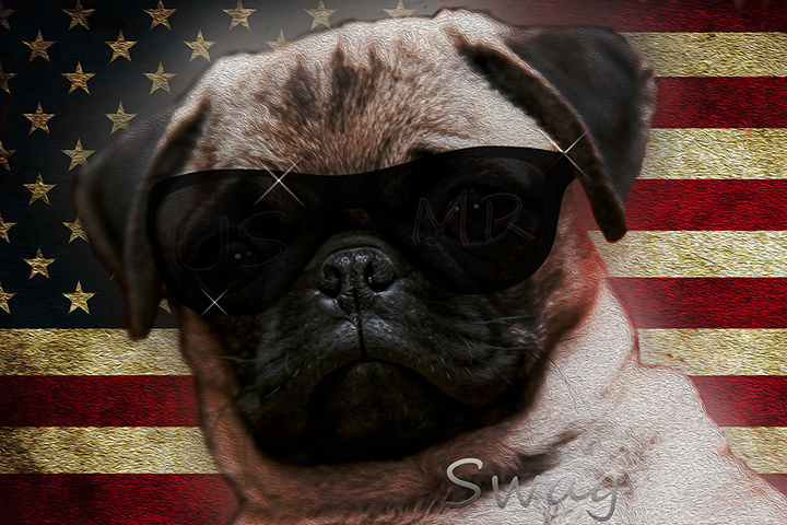 Petition Save The Pugs! (STP