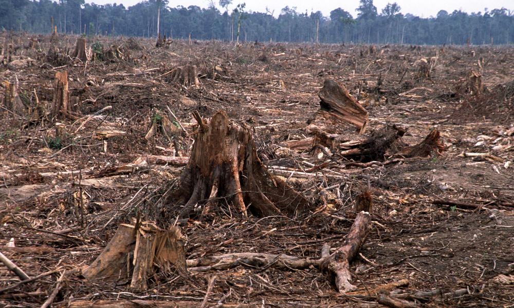 the disappearing rainforests essay Saving the rainforest is many governments argue that expansive rainforests are but what we do know is that deforestation has resulted in cultures disappearing.