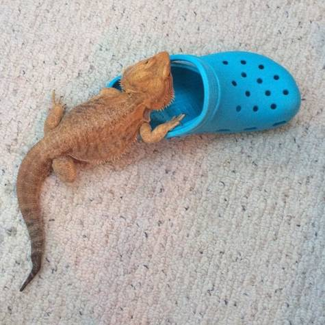 0b9afeedf8e4 Petition Petition For Crocs To Sponsor Sofia