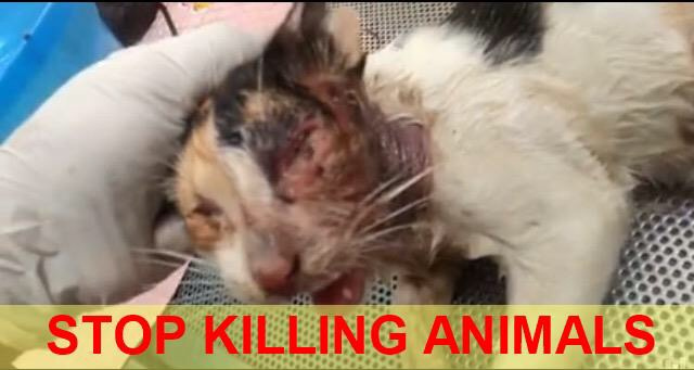 STOP MURDERING DOGS AND CATS IN SRI LANKA