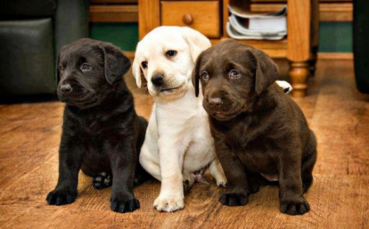 Stop proposed ban on pet stores selling pups in WA