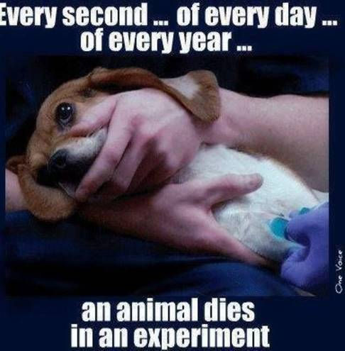 animal testing is immoral and should be stopped Free animal testing papers animal research should - animal experimentation is a process involving the immoral and unethical treatment of animals in order.