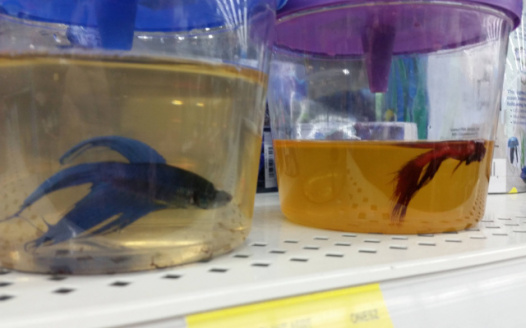 Petition walmart leave the fish to the pet stores for Pet stores that sell fish